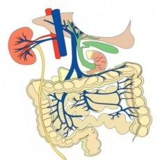 Гигиена органов пищеварения